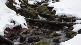 Ρεύμα σε ένα χειμερινό δάσος βουνών φιλμ μικρού μήκους