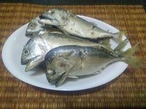 ρεύμα σκουμπριών, ψάρια ρευμάτων στο άσπρο πιάτο Στοκ Φωτογραφίες