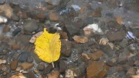 Ρεύμα στο δάσος φθινοπώρου απόθεμα βίντεο