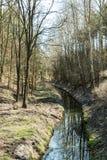 Ρεύμα στο δάσος Στοκ Φωτογραφίες