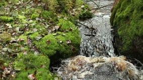 Ρεύμα στο πολύβλαστο πράσινο δάσος απόθεμα βίντεο
