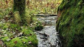 Ρεύμα στο πράσινο τροπικό δάσος φιλμ μικρού μήκους