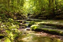 Ρεύμα στο δάσος Στοκ Εικόνες