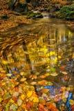 ρεύμα φθινοπώρου Στοκ Φωτογραφία