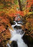 Ρεύμα φθινοπώρου Στοκ Εικόνες