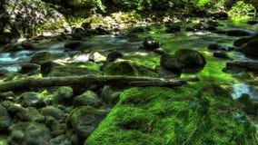 Ρεύμα χρονικού σφάλματος HDR του νερού στη φύση απόθεμα βίντεο