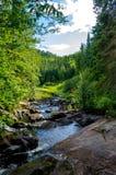 Ρεύμα Algonquin στο πάρκο, Οντάριο, Καναδάς Στοκ Φωτογραφίες