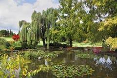 ρηχά δέντρα λιμνών λουλου&de Στοκ Εικόνες