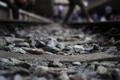 ρηχή διαδρομή σιδηροδρόμων πεδίων βάθους Στοκ φωτογραφίες με δικαίωμα ελεύθερης χρήσης