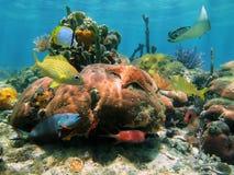 Ρηχή κοραλλιογενής ύφαλος Στοκ Εικόνα