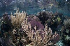 Ρηχός καραϊβικός σκόπελος Στοκ εικόνες με δικαίωμα ελεύθερης χρήσης