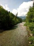 Ρηχός ποταμός που διατρέχει των ξύλων Στοκ φωτογραφία με δικαίωμα ελεύθερης χρήσης