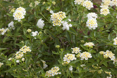 Ρηχός του βάθους - λουλούδι που φυσά στη θαμπάδα κινήσεων αέρα gar Στοκ φωτογραφίες με δικαίωμα ελεύθερης χρήσης