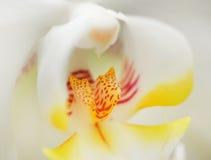 Ρηχό βάθος ορχιδεών λουλουδιών του τομέα Στοκ Εικόνες