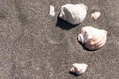 ρηχό κοχύλι θάλασσας άμμου πεδίων βάθους Στοκ Εικόνα