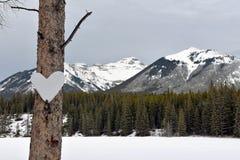 ρηχό χιόνι καρδιών πεδίων βάθους Στοκ εικόνα με δικαίωμα ελεύθερης χρήσης