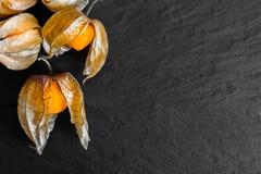 Ριβήσια ακρωτηρίων με τα κοχύλια στη μαύρη επιφάνεια βράχου Στοκ Εικόνες