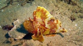 Ριγωτά ψάρια εγγράφου Στοκ εικόνες με δικαίωμα ελεύθερης χρήσης
