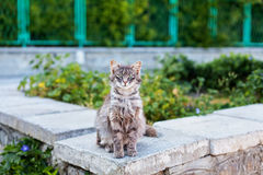 Ριγωτή γάτα που εξετάζει τη κάμερα Στοκ Φωτογραφίες