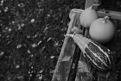 Ριγωτή κολοκύθα και δύο ομαλές διακοσμητικές κολοκύθες Στοκ φωτογραφίες με δικαίωμα ελεύθερης χρήσης