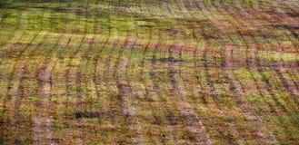 Ριγωτή σύσταση υποβάθρου τομέων Manicured Στοκ Φωτογραφίες