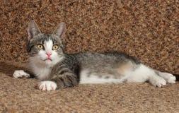 Ριγωτό γατάκι που βρίσκεται στον καναπέ Στοκ Φωτογραφία