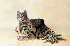 Ριγωτό γατάκι που βρίσκεται στο μαντίλι Στοκ Φωτογραφία