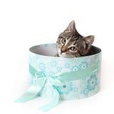 Ριγωτό γατάκι που κρυφοκοιτάζει έξω από το μπλε κιβώτιο δώρων Στοκ Φωτογραφίες