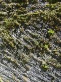Ριγωτό σχέδιο των πράσινων νησιών βρύου σε έναν τοίχο πετρών Στοκ φωτογραφίες με δικαίωμα ελεύθερης χρήσης
