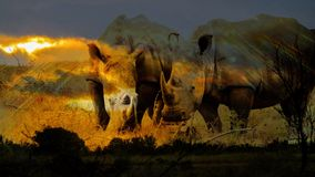 Ρινόκεροι στο ηλιοβασίλεμα Στοκ Φωτογραφία