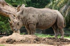 Ρινόκερος και φύση Στοκ Εικόνες