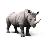 Ρινόκερος που απομονώνεται σε ένα άσπρο υπόβαθρο Στοκ Εικόνες