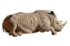 Ρινόκερος στο άσπρο υπόβαθρο Στοκ εικόνα με δικαίωμα ελεύθερης χρήσης