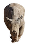 Ρινόκερος στο άσπρο υπόβαθρο Στοκ φωτογραφία με δικαίωμα ελεύθερης χρήσης