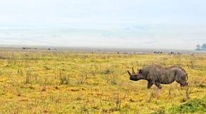 Ρινόκερος στο εθνικό πάρκο της Τανζανίας Στοκ Φωτογραφία