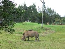 Ρινόκερος στο πάρκο Στοκ φωτογραφίες με δικαίωμα ελεύθερης χρήσης