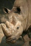 ρινόκερος Στοκ φωτογραφία με δικαίωμα ελεύθερης χρήσης