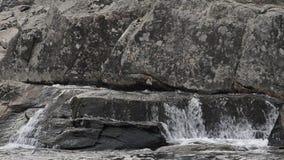 Ροές νερού πέρα από τους μεγάλους βράχους στις πτώσεις Linville απόθεμα βίντεο