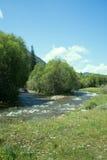 Ροές ποταμών βουνών στο δάσος κάτω από την προκατάληψη Στοκ Εικόνες