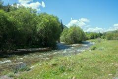 Ροές ποταμών βουνών στο δάσος κάτω από την προκατάληψη Στοκ Εικόνα
