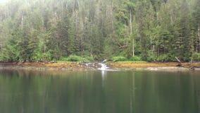 Ροές ποταμών βουνών στο νερό του Ειρηνικού Ωκεανού στην ακτή υποβάθρου στην Αλάσκα απόθεμα βίντεο