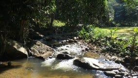 Ροές ποταμών πέρα από τους βράχους στο δάσος φιλμ μικρού μήκους