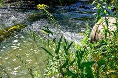 Ροές του νερού από το σωλήνα στον ποταμό Στοκ φωτογραφία με δικαίωμα ελεύθερης χρήσης