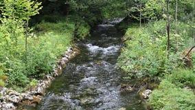 Ροές Saletbach κατά μήκος της ανώτερης λίμνης φιλμ μικρού μήκους