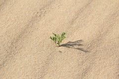 ροή άμμου του $ροστόκ Στοκ φωτογραφία με δικαίωμα ελεύθερης χρήσης