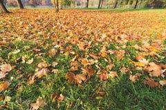 Ροή αλλαγής εποχής θερινές φθινόπωρο, μετάβαση και της χρονικής έννοιας Στοκ εικόνες με δικαίωμα ελεύθερης χρήσης