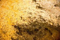 Ροή βακτηριδίων Στοκ Φωτογραφίες