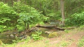 Ροή νερού ποταμού μέσω του άγριου δάσους απόθεμα βίντεο