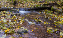 Ροή του νερού, φύλλα πτώσης στοκ φωτογραφίες με δικαίωμα ελεύθερης χρήσης