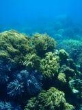 ροή anemone Στοκ εικόνα με δικαίωμα ελεύθερης χρήσης